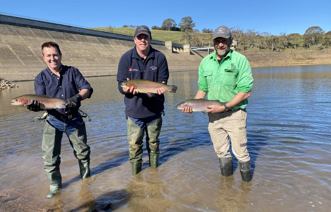 THEY'RE BIG: Paul Toole, Paul Sheather from the Dutton Trout Hatchery and Peter Byrom, member of the Central Acclimatisation Society.