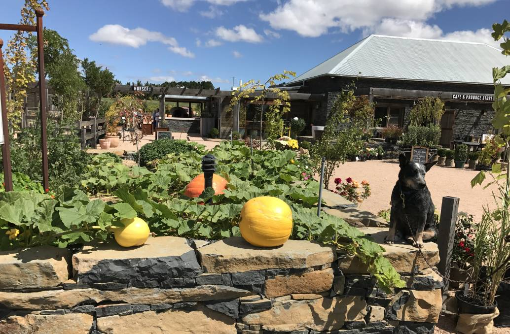 Delicious Delights: Chef Dan from Mayfield Gardens will be hosting sessions during Oberon Youth Week celebrations about preparing and cooking healthy food options. Photo: Oberon VIC.